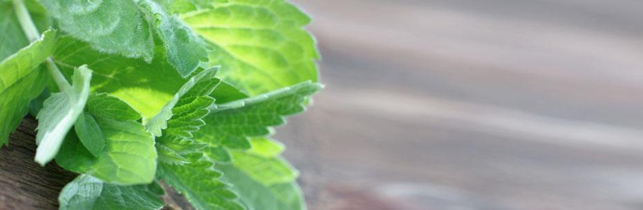 PageBannerHeader_Leaf